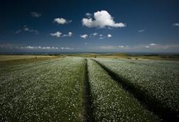 Sussex fields