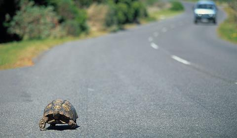 Tortoise on the road